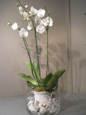 Bloeiende plant Orchidee - 01