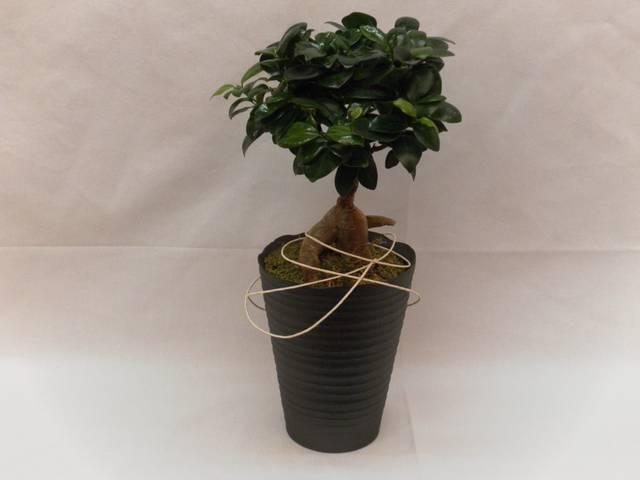 Groene plant 1 - 01