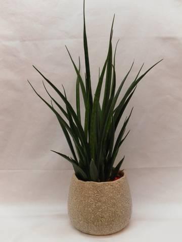 Groene plant 2 - 01
