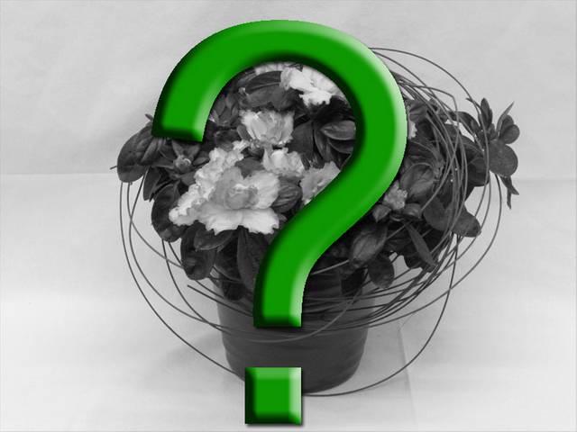 Bloeiende plant Keuze van uw Florist - 01